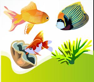 fakta hewan : apakah semua ikan bertelur?