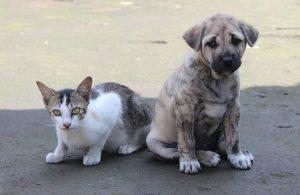 arti peribahasa seperti anjing dan kucing