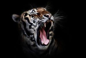 arti peribahasa mulitmu harimaumu yang akan merekah kepalamu