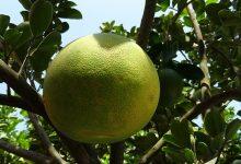fruit-1762419_640