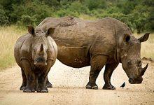 rhinoceros-2814765_640